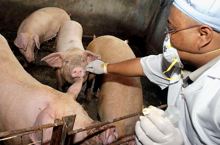 Swine Flu Alert In Britain